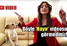 işaret dili hayır video banu özdemir köpek giremez