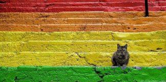 Kediler ve insanlar kim kimin sahibi