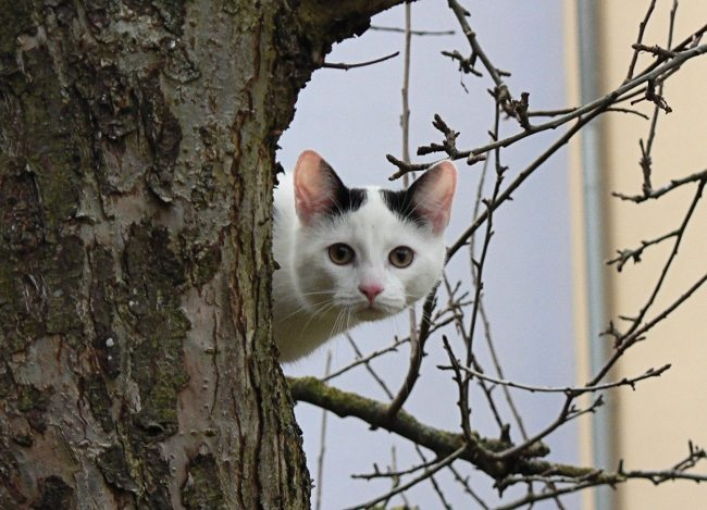 kediler Fotoğraf: Albert Held, Kedi: Felix