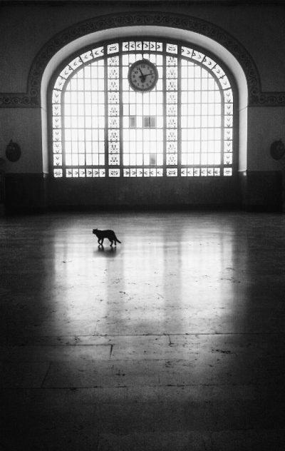 Fotoğraf: Eren Çevik