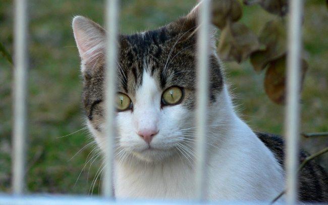Fotoğraf: Albert Held kediler