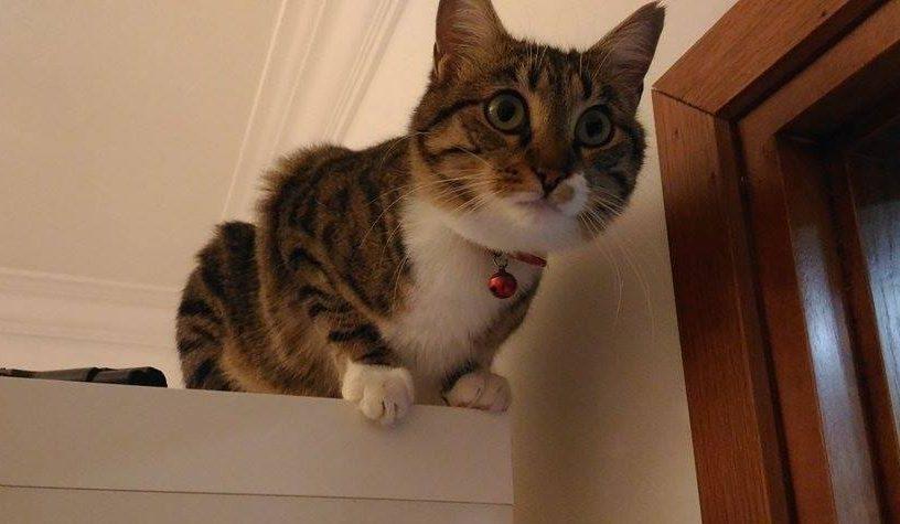 kediler içgüdüsel avcı Fotoğraf: İlkim Sazyek Kedi: Balım