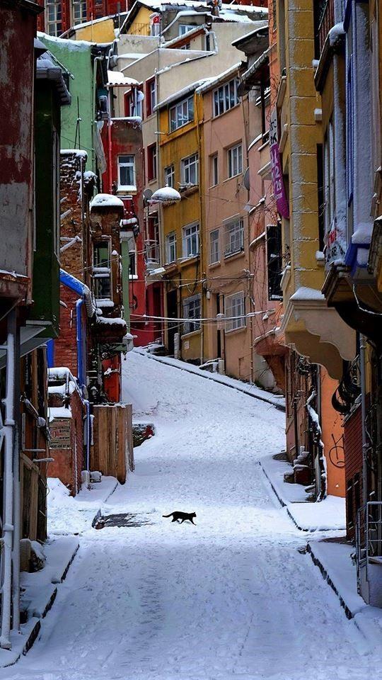 sokak kedileri sokaktaki kediler Fotoğrad: Eren Çevik