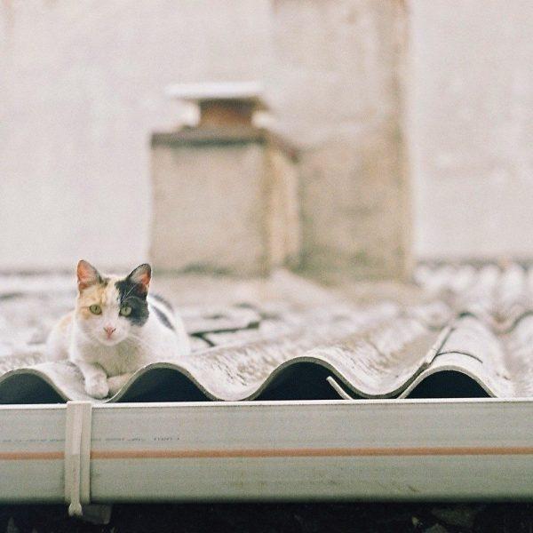 Fotoğraf: Eren Çevik kediler nüfus planlaması