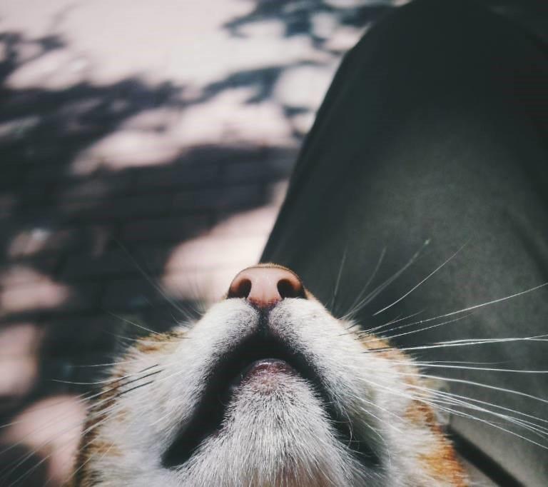 Fotoğraf: Eren Çevik kediler her zaman fotojenik