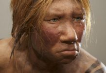 Neanderthal'lerle ilgili bulgular şaşırtmaya devam ediyor