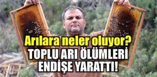 Türkiye'de arılara ne oluyor? Arı ölümleri endişe yarattı!