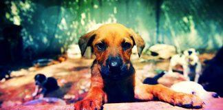 Trakya Üniversitesi'nden hayvan hakları için örnek proje