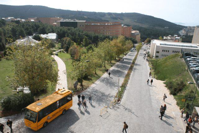 yeditepe üniversitesi kampüsü sokak hayvanları