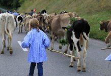 Zihin Dolabındaki inek Balka ve küçük kız