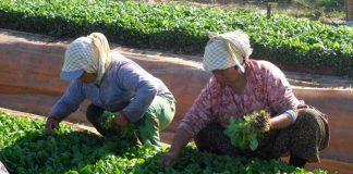Tütün ihracatçıları kaçak tütün ticaretiyle etkin mücadele istiyor
