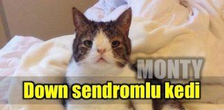 down sendromlu kedi monty