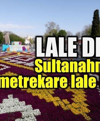 Lale Devri: Sultanahmet'te 1453 metrekare lale halısı