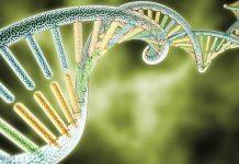 Obezite geni zayıf olmanıza engel mi?