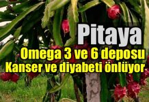 Pitaya ejder meyvesi nedir? 6 mucizevi faydası ne?