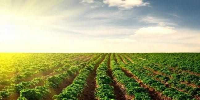 tarım ihracatı