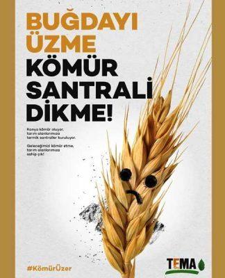 """TEMA Vakfı: """"Buğdayı üzme kömür santrali dikme"""" kampanyası"""