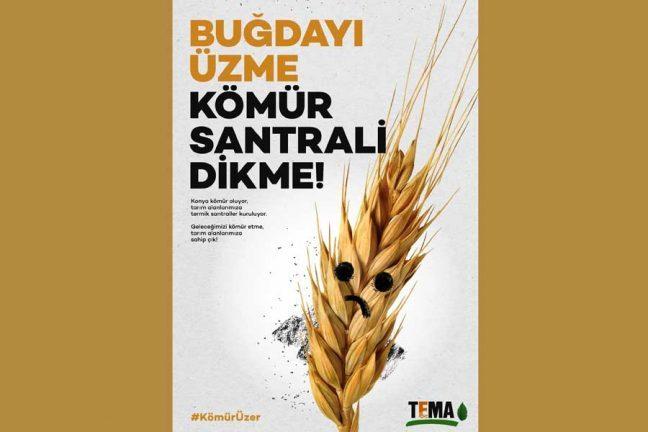 """TEMA Vakfı:""""Buğdayı üzme kömür santrali dikme"""" kampanyası"""