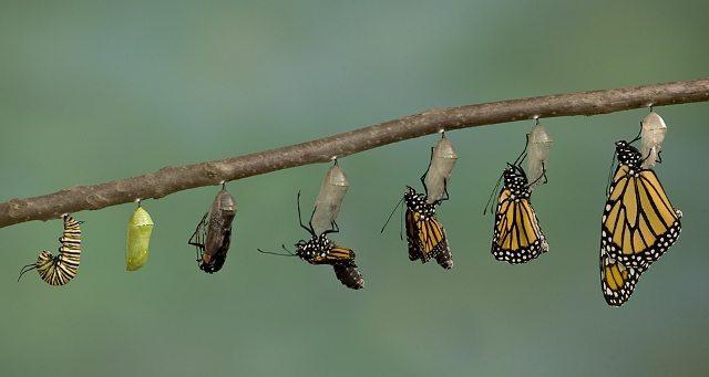 hayal gücümüzü tırtılın kelebeğe dönüşme hikayesi