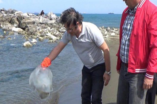 Zehirli denizanalarına dikkat