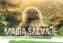 Latin Amerika sineması Akbank Sanat'ta