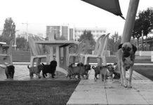 tobb ekonomi ve teknoloji üniversitesi hayvan severler topluluğu bulut ve yavruları