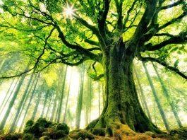 My body said Hug a tree