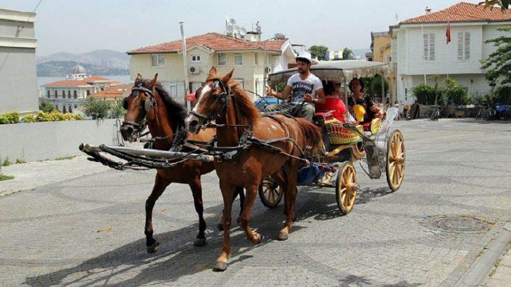 Atların ortalama ömrü 20 yıl iken, faytonda çalıştırılan işçi atlar 2 yıl yaşıyor prens adaları büyük ada adalar