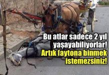 Faytonların at katliamı: Yılda 800 at ölüyor!