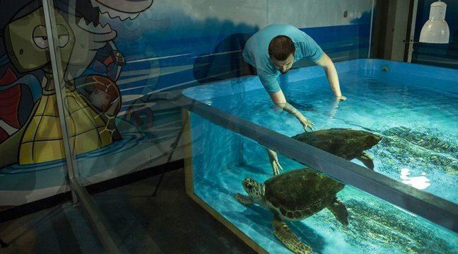 Kaplumbağa Dilek