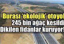 Yavuz Sultan Selim Köprüsü güzergahındaki Kuzey Marmara Otoyolu projesi kapsamında dikilen fidanlar kuruyor!