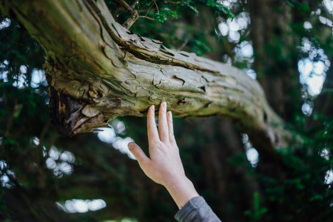 """TEMA Vakfı""""Doğayla Temasta Ol"""" diyor"""