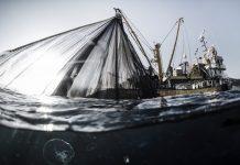 Lüfer Belgeseli: Bir belgesel bir balığın soyunu kurtarabilir mi?
