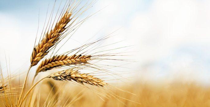 buğday ithalat gümrük vergisi kararname çiftçi tarım