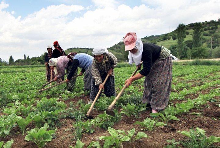 çiftçi kan ağlıyor buğday ithalat gümrük vergisi kararname çiftçi tarım