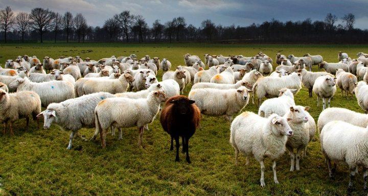 hayvancılık tarım çiftçi kararname besi yem ithal