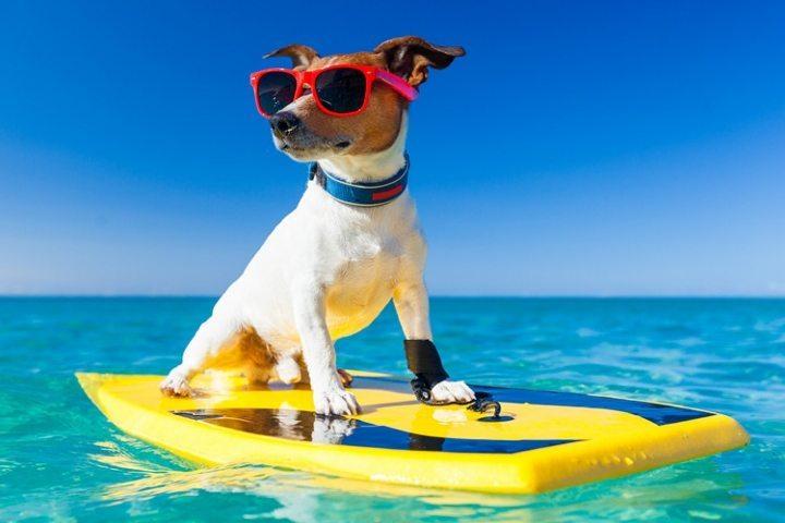 Köpekler için sörf eğitmeni