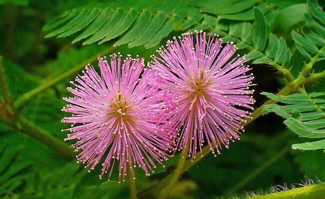 Depremden yarım saat önce'Dokunma Bana Çiçeği' kapanır küstüm sana çiçeği
