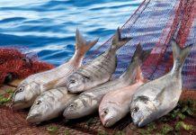 balık anadolu