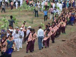 Hindistan'da ağaç dikme kampanyasıyla dünya rekoru kırıldı