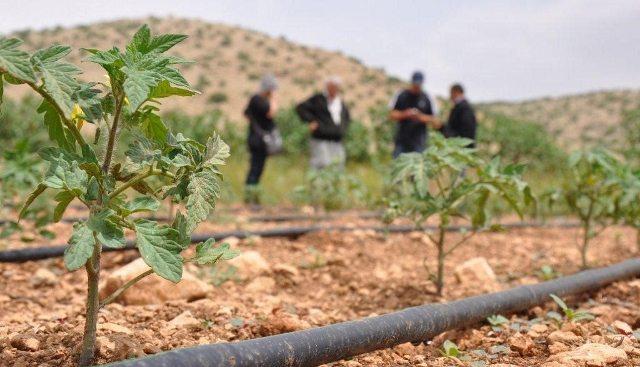 organik tarım diyarbakır eğil ılgın köyü birleşmiş milletler gap