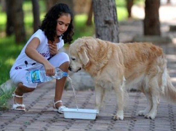 Sokak hayvanlarının bize ihtiyacı var