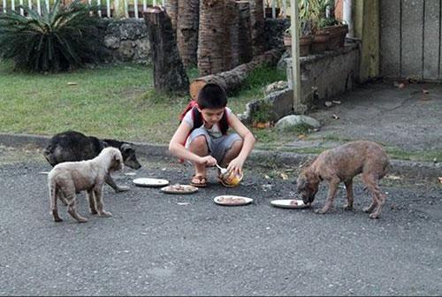 Sokak hayvanları için neler yapmalı?
