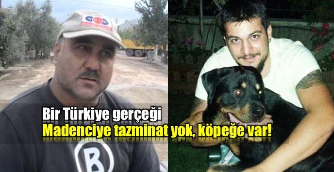 Türkiye'de hukuk: Köpeğe tazminat var; madenciye yok!