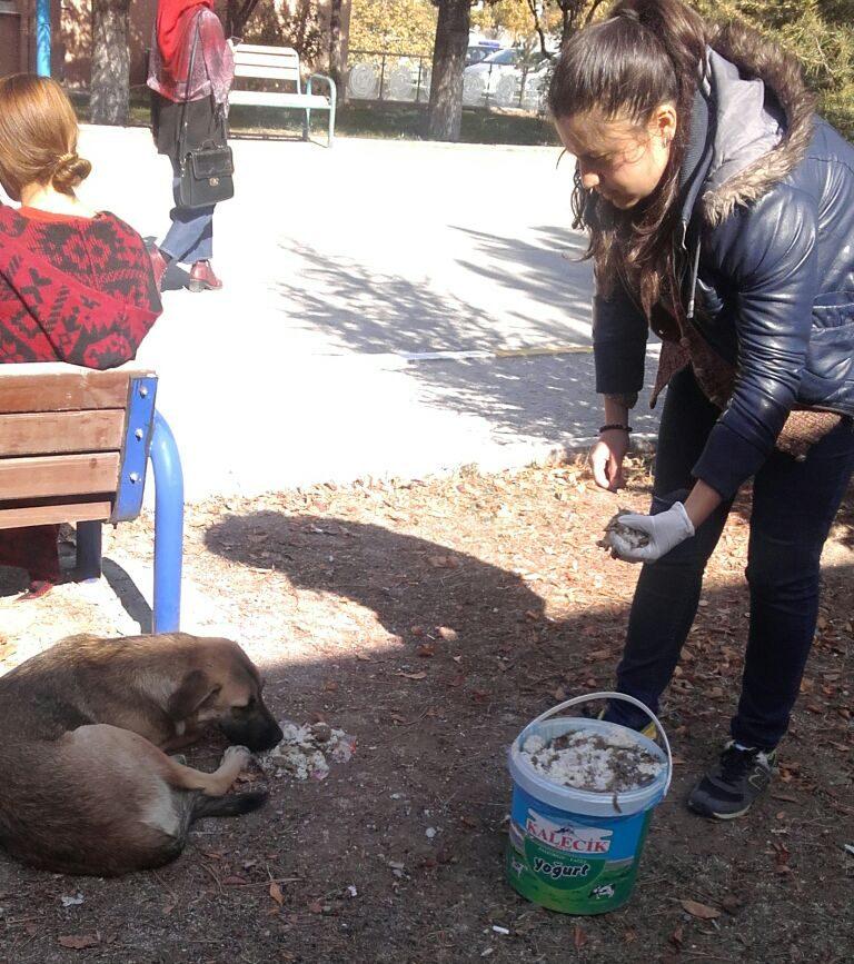 Gazi Üniversitesi Sokak Hayvanlarını ve Doğayı Koruma Topluluğu