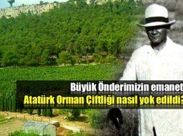 Atatürk Orman Çiftliği mi yoksa Ali Baba'nın çiftliği mi?