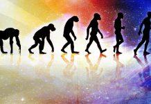 Evrim Teorisi nedir?