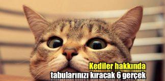 Kediler hakkında içinizi ısıtacak 6 gerçek