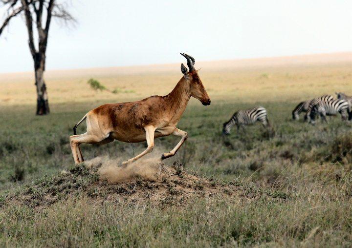 Büyük Göç, Tanzanya