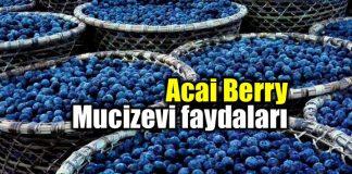 Acai üzümü nedir? Acai berry faydaları neler?